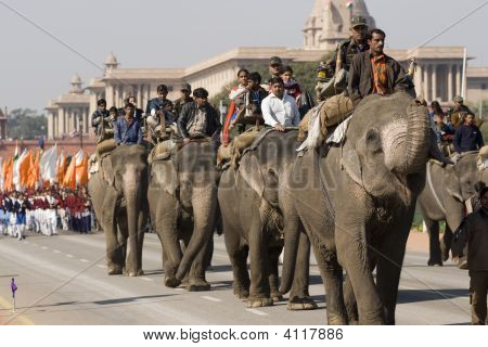 Elephants On Republic Day Parade
