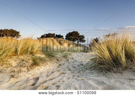 Sand Dunes At Sandbanks