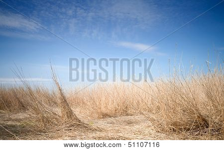 Uncommon Fantastic Landscape With Deep Blue Sky And Coastal Dry Reed