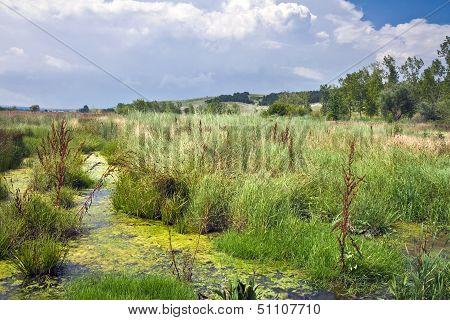 Summer March Landscape