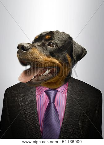Rottweiler Dog  dressed up as formal business man