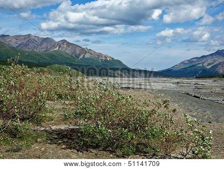 Denali's Toklat River