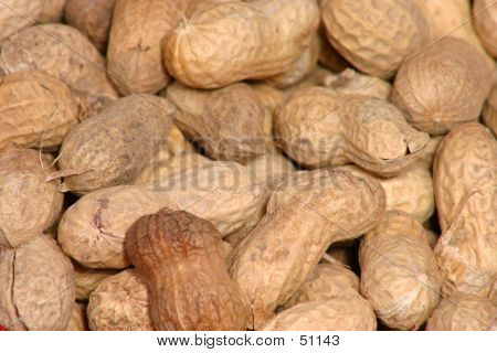 Circus Nuts