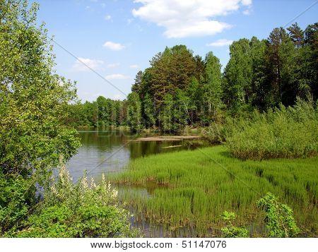 Old, overgrown pond among the wood