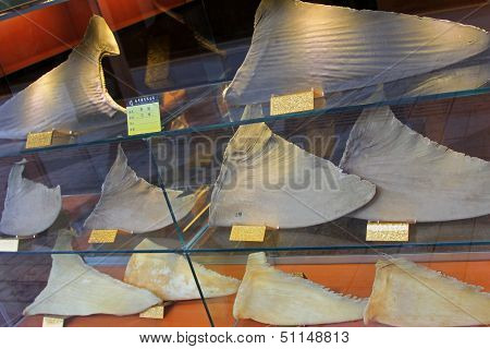 MACAU - APRIL 2013 : Dried Shark fins on the shelf at the traditional Chinese shop on April 12, 2013 in Macao.