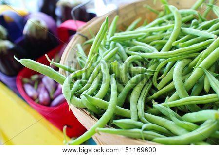 Bushel Baskets of Fresh Green Beans