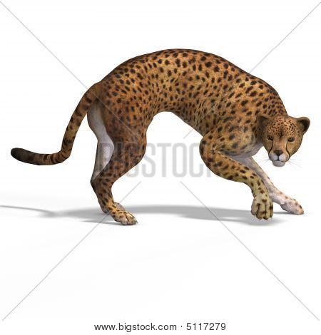 Big Cat Cheetah