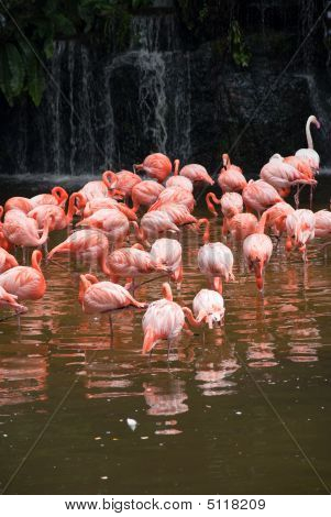 Pool Of Flamingo
