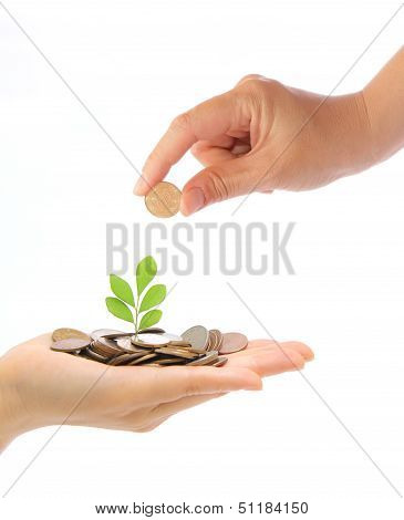 Hand And Green Plant Growing From The Coins