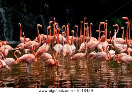 Pool Of Flamingo