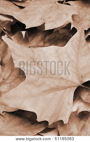 picture of a pile of dried leaves in autumn