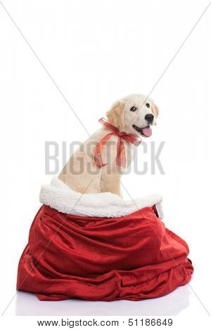 pet dog gift for christmas holiday