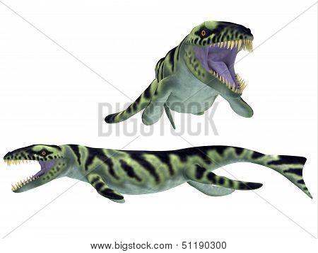 Dakosaurus On White