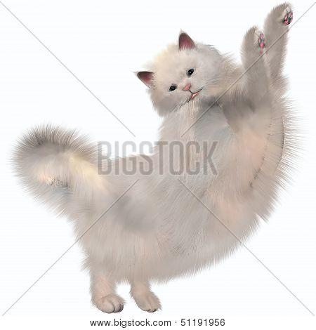 Oriental White Cat