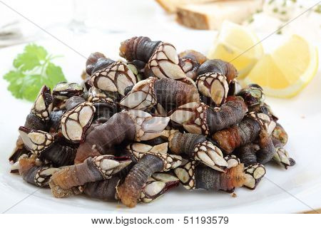 dish of boiled goose barnacle - traditional food from portugal
