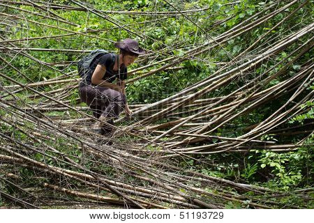 Woman trekking in jungle and encountering bamboo branches on her way