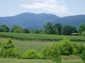 stock photo of blue ridge mountains  - Rolling green mountains in the heart of the blue ridge - JPG