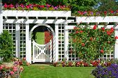 foto of petunia  - White garden gate and fence in colorful botanical garden - JPG