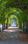 stock photo of schoenbrunn  - Green tree alley  - JPG