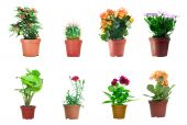 picture of flower pots  - Several potted plants isolated over white background - JPG