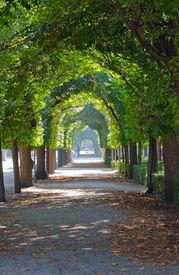 picture of schoenbrunn  - Green tree alley  - JPG