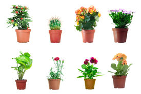 stock photo of flower pot  - Several potted plants isolated over white background - JPG