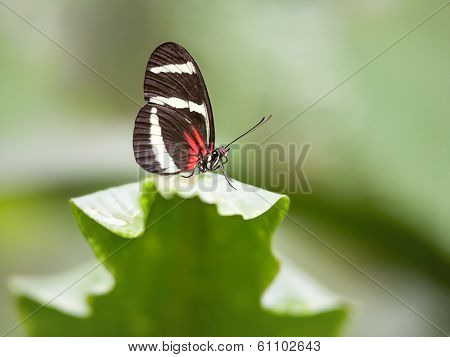 An image of a nice nymphalidae butterfly