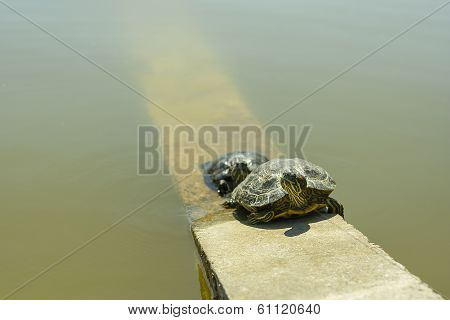 two turtles near a pond