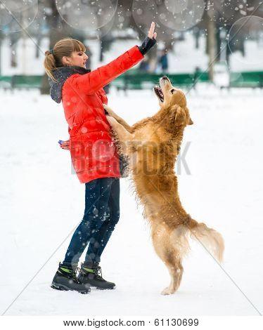 girl traing a dog breed golden retriever