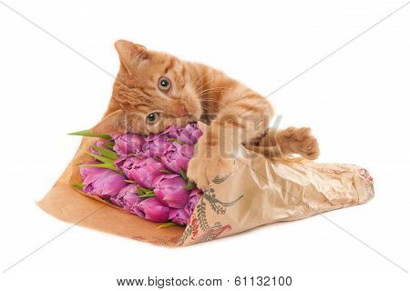 Ginger kitten with tulips