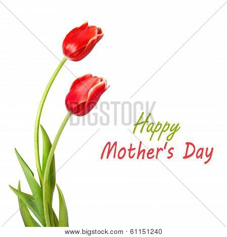 Bouquet Of Red Tulips With Green Leaves Isolated On White Background