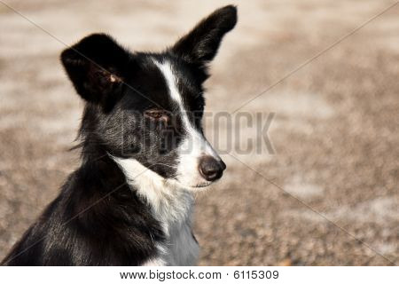 Stray Dog Winking
