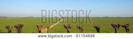 Row of pollard willows in winter