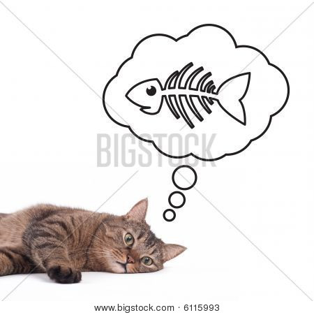 cat dreaming about fish