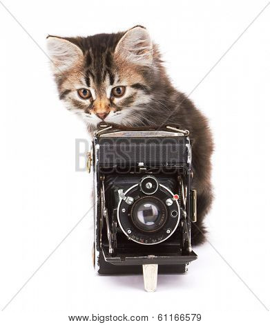Little Kitten with photocamera, isolated on white background