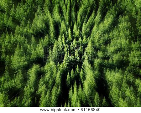 Forest of green pine trees on mountainside with late afternoon sunlight and zoom blur