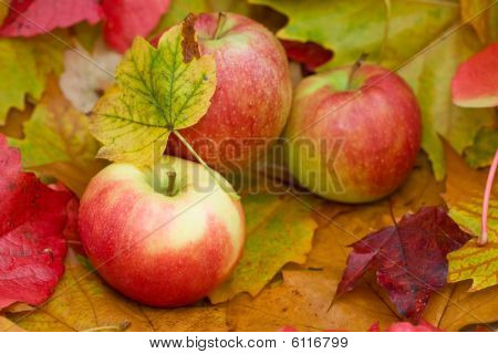 Fresh apples - NEW harvest