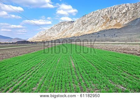 Arable Field At Spring