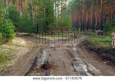 The road through the forest.