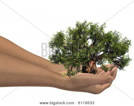 HIGH RESOLUTION 3D hands holding a 3D baobab tree