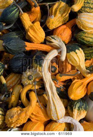 Colorful Squash