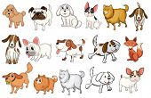 stock photo of hound dog  - Illustration of the different breeds of dogs on a white background - JPG