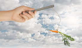 foto of dangling a carrot  - Close up of hand holding stick with carrot dangling on rope - JPG
