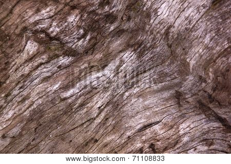 Grain And Texture On Debarked Tamboti Log