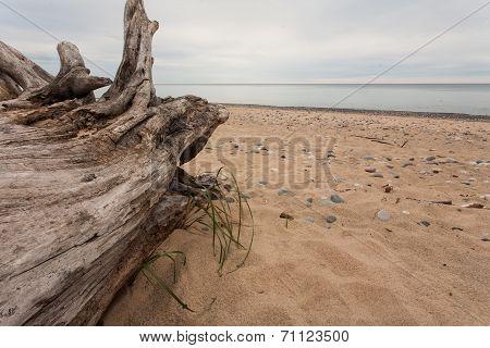 Log on a Beach