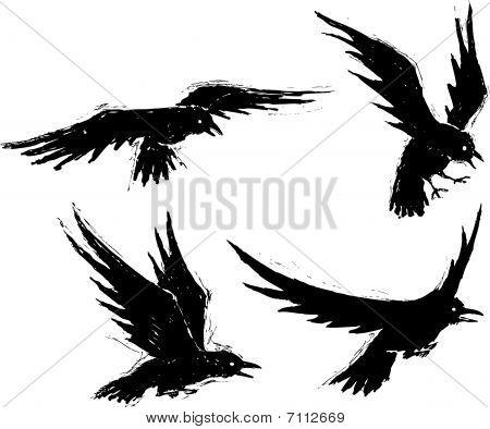 Grundge crows