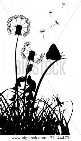 illustration with black dandelions on white background