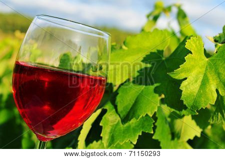 closeup of a glass with red wine in a vineyard