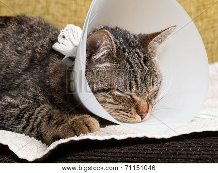 Cat With An Elizabethan Collar Inside Home