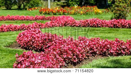 Beds Of Pink Flowers In A Green Garden